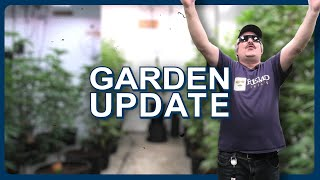 Remo's Garden Update (TRIGGER - Day 14)