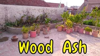 The Best Organic Wood Ash Fertilizer | See the Result of Wood Ash You Cannot Believe