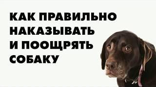 Как правильно наказать и поощрить собаку