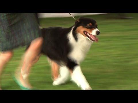 Richmond Champinship Dog Show 2014 - Pastoral group