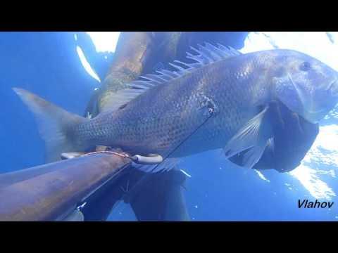 Spearfishing, Podvodni ribolov, Oleg Vlahov, Dentex Dentex II, 2015