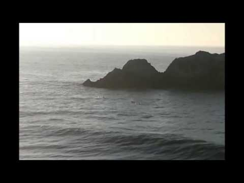 Dolphins at Seal Rock San Francisco