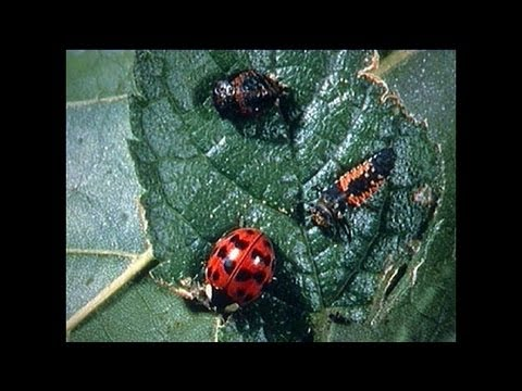 Integrated Pest Management Part 1