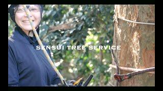 台風枝折れの撤去及び老齢木木槌打診。準備から登りこみまで thumbnail