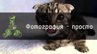 Фотография – просто. Промо котик