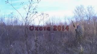 охота на фазана , курцхаар 2014 р