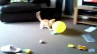 Коты!!! Приколы!!!Лопают шарики!!!