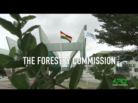 GHANA FORESTRY - OUR BUSINESS