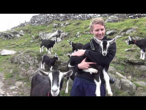 WWOOF IRELAND On Cape Clear Goat Farm