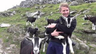 WWOOF IRELAND on Cape Clear Goat Farm