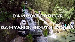 Juknokwon Bamboo Forest, Damyang