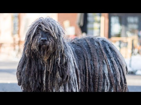 Top ten rarest breed in world