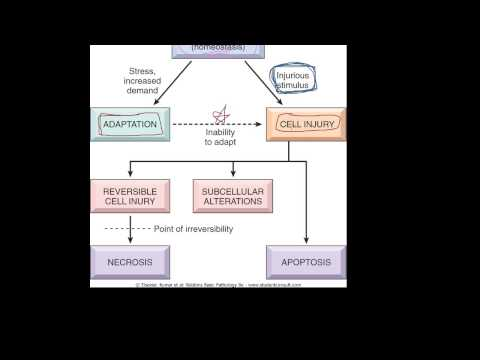 #1 - Introduction to pathology - etiology, pathogenesis, morphology terms, homeostasis, apoptosis