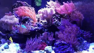 Морской аквариум. Как часто кормить рыбу, как часто менять фильтр.