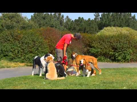 DOGTV STIMULATION: The busy dog walker