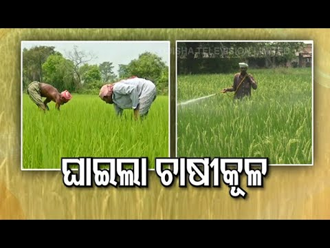 #COVID19-Centre's New Directive A Silver Lining For Ailing Farm Works In Odisha