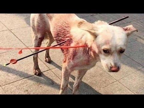 Бездомную собаку пронзили насквозь двумя стрелами, но добрые люди не дали ей умереть
