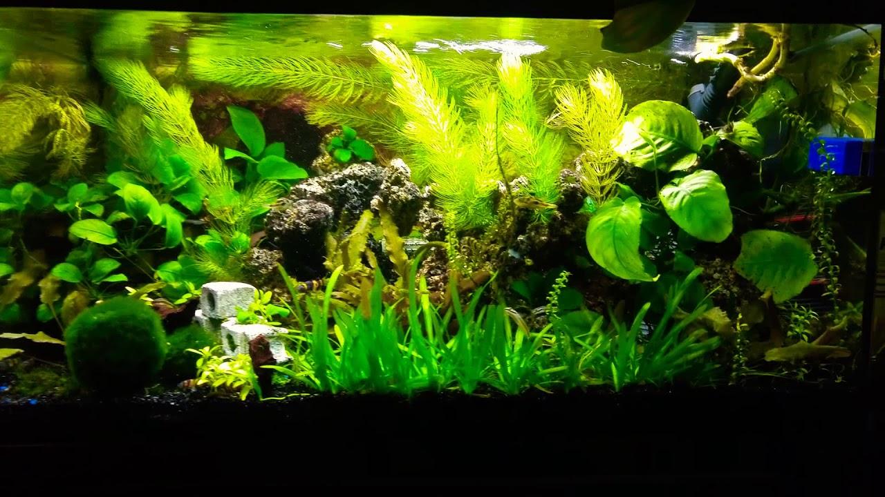 El acuario de mi cuarto actualizado acuario comunitario for Acuario comunitario