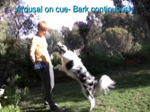 Crazy Dog Tricks