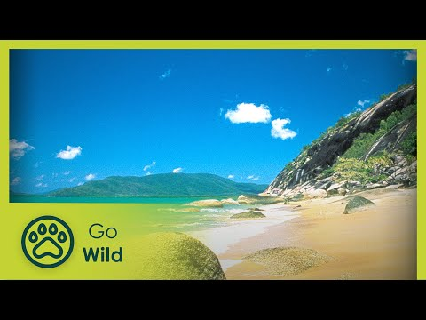Triumph and Tragedy on the World's Greatest Reef - The Secrets of Nature