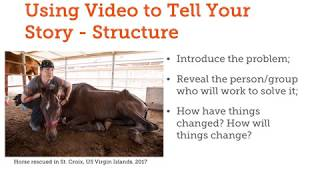How Shelters and Rescue Can Leverage Storytelling Through Video