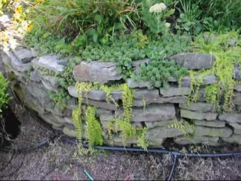 NYC Gardening Plants  We Grow  and Plant yEARROUND