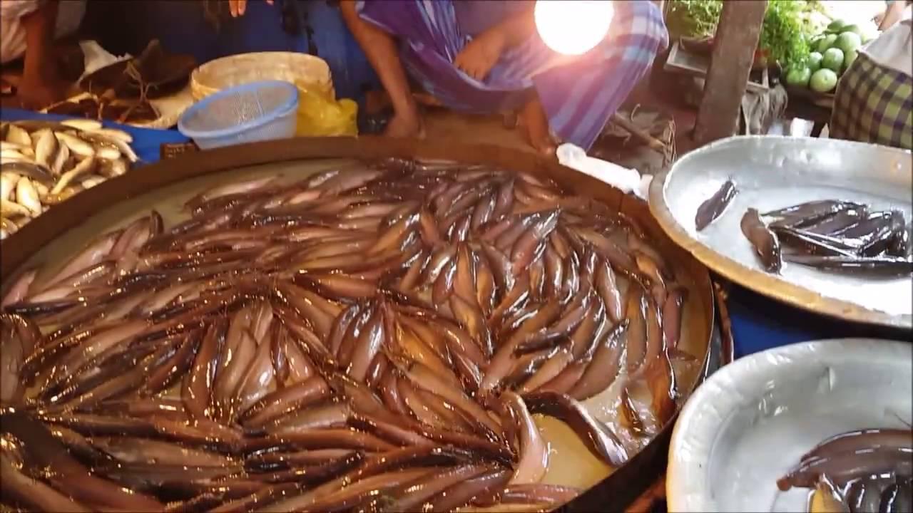 Image result for fishing to dhaka