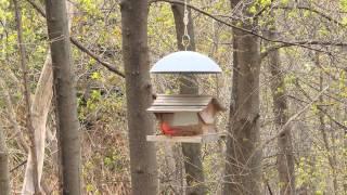 Bird Feeder #1 Bluejay And Cardinal