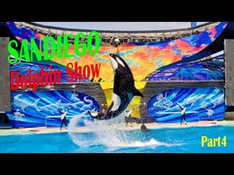 California Travel Destinations & Attractions   Visit Seaworld San Diego Dolphin Show 2016 Part4