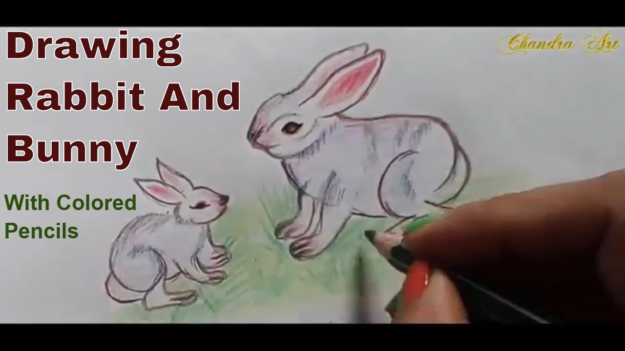 Color Pencil Drawing For Beginners Learn How To Draw A Rabbit And