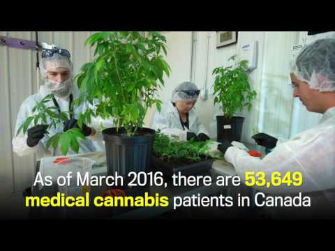 Take a look inside Alberta's only licensed medical marijuana facility