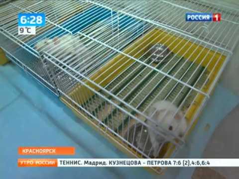 Красноярск – последние новости
