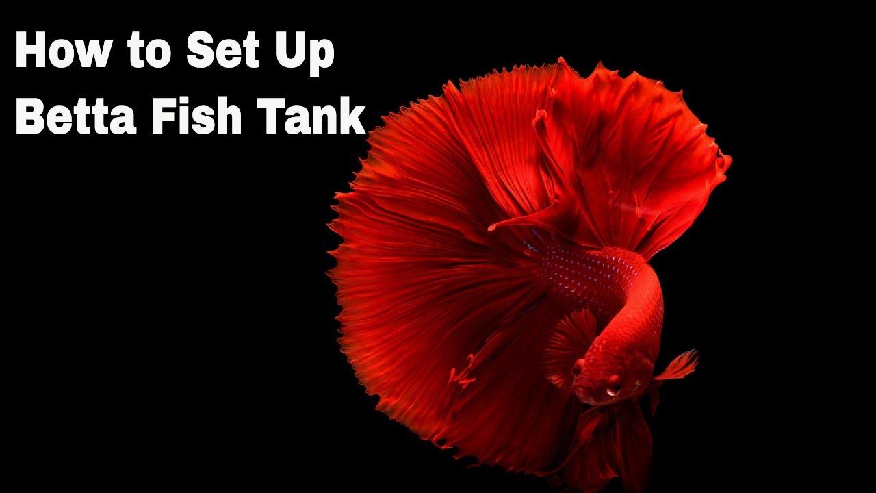 How to set up betta fish tank |Malayalam Vlog |Maple Leaves ||
