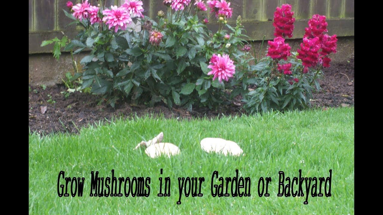 grow mushrooms in your garden or backyard youtube
