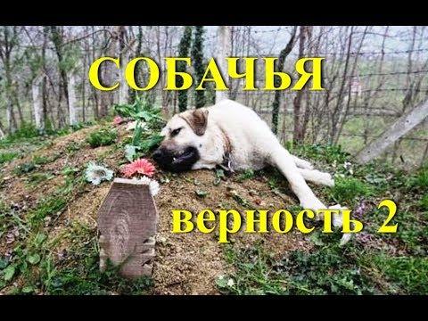 Шок и слезы. Собачья преданность и верность (Сбор из ТВ каналов 2)