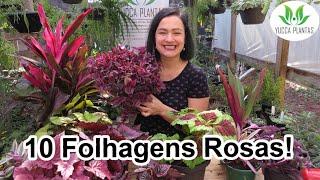 10 Lindas Folhagens Rosas