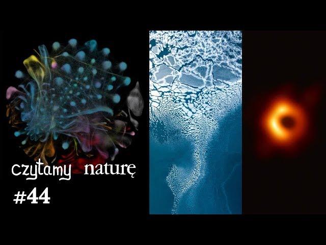 Czytamy naturę #44 | Rok 2019 w nauce