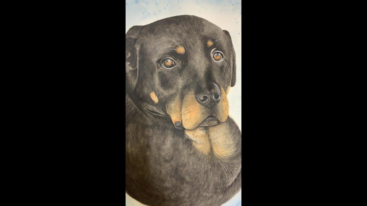 Rottweiler Watercolor  Portrait