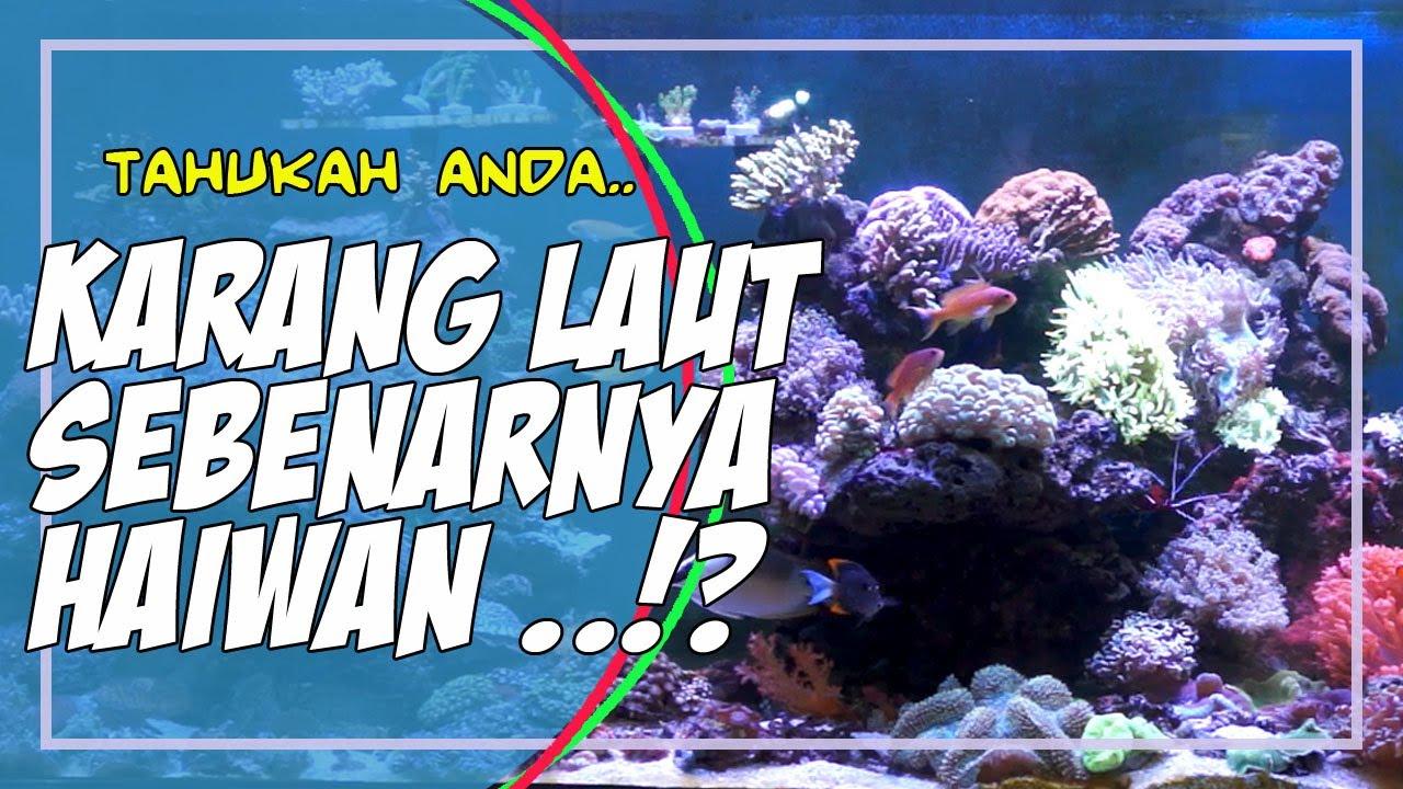 Tips Menjaga Aquamarin Hiasan Youtube