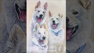 Three White Shepherds - Derwent Inktense