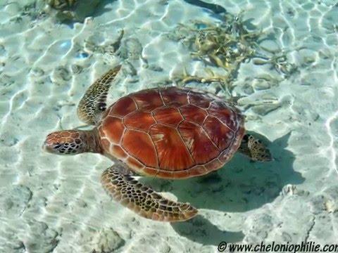 Les plus belles tortues du monde youtube for Les plus belles moquettes