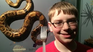 12-yr-old eats Snake (Python) : In The Kitchen w/The Crude Brothers