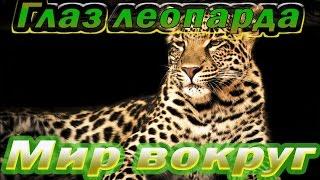 Глаз леопарда. Документальный фильм. (National Geographic)