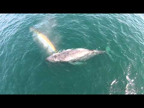 Whale shoots rainbow from it's blowhole! (with audio)