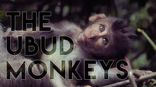 Tri Hita Karana 🙈🙊🙉 The Ubud Monkeys