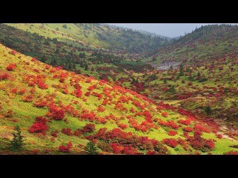 紅葉が真っ盛り美しき志賀高原の秋・4k