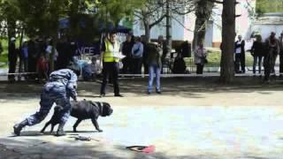 """Соревнования по программе """"Собака сопровождения"""" (Симферополь, 2009)"""