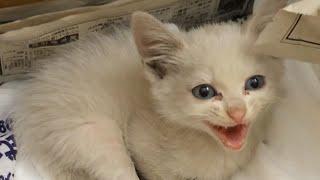 虐待されてゴミ箱に捨てられた野良の子猫(前編)~可愛い鳴き声に里親即決 -Cute Kitten has been thrown away in trush can