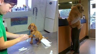We HATE going to the vet! Hilarious photos show traumatised pets who don