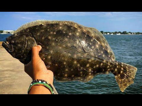 Камбала морская: описание, места обитания, нерест и